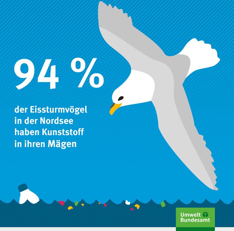 Infograpgik - 94% der Eissturmvögel in der Nordsee haben Kunststoff in ihren Mägen